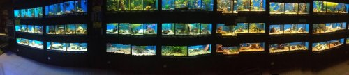 An old panoramic shot of one of the fishwalls