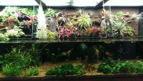 One of our new, open top show tanks with plants and fish inside