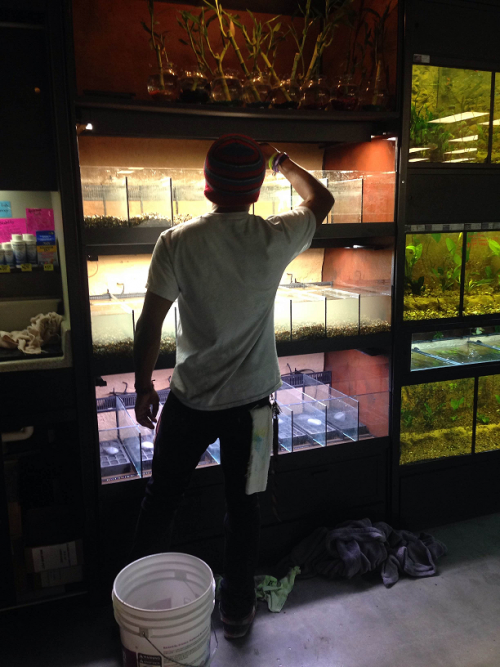 Xavier working on our new cube tanks for bettas and fancy plecos