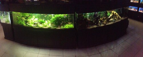 An old panoramic shot of some of the display tanks