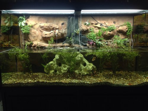 One of our new, open top show tanks with plants in it