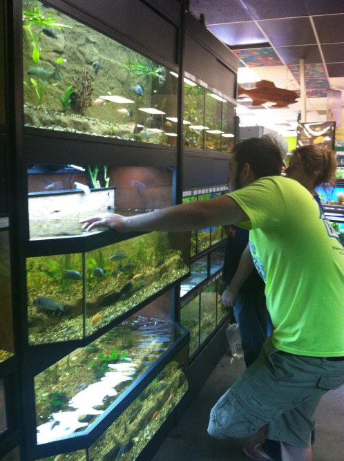 Phill helps a few customers decide on what fish would be best for them from our new, easily accessible tanks!