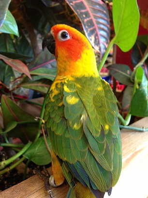 Birds For Sale >> Baby Birds Pet World Experience Lawrence Ks