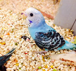 Birds For Sale >> Birds For Sale Pet World Experience Lawrence Ks