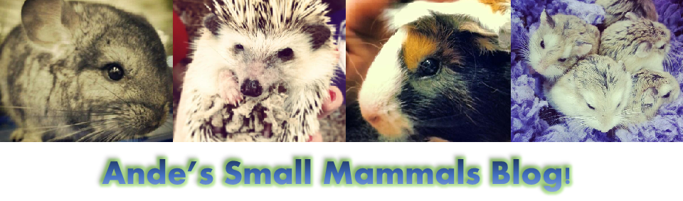 Small Mammals Blog
